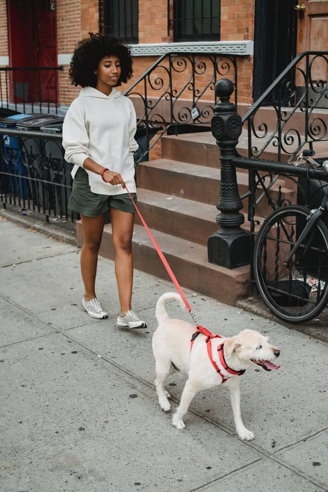 mujer paseando perro