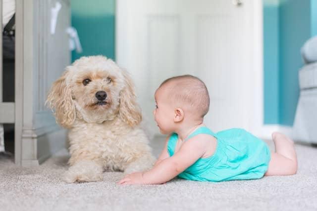 bebé cerca de un perro preocupado