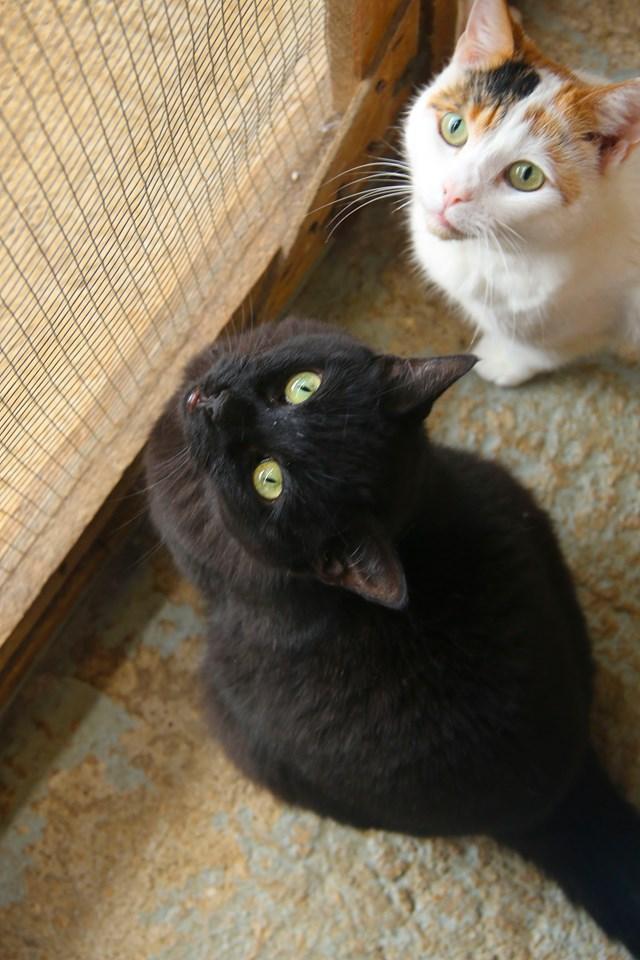 Jasper & Flo