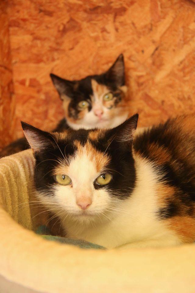 Missy & her Kitten
