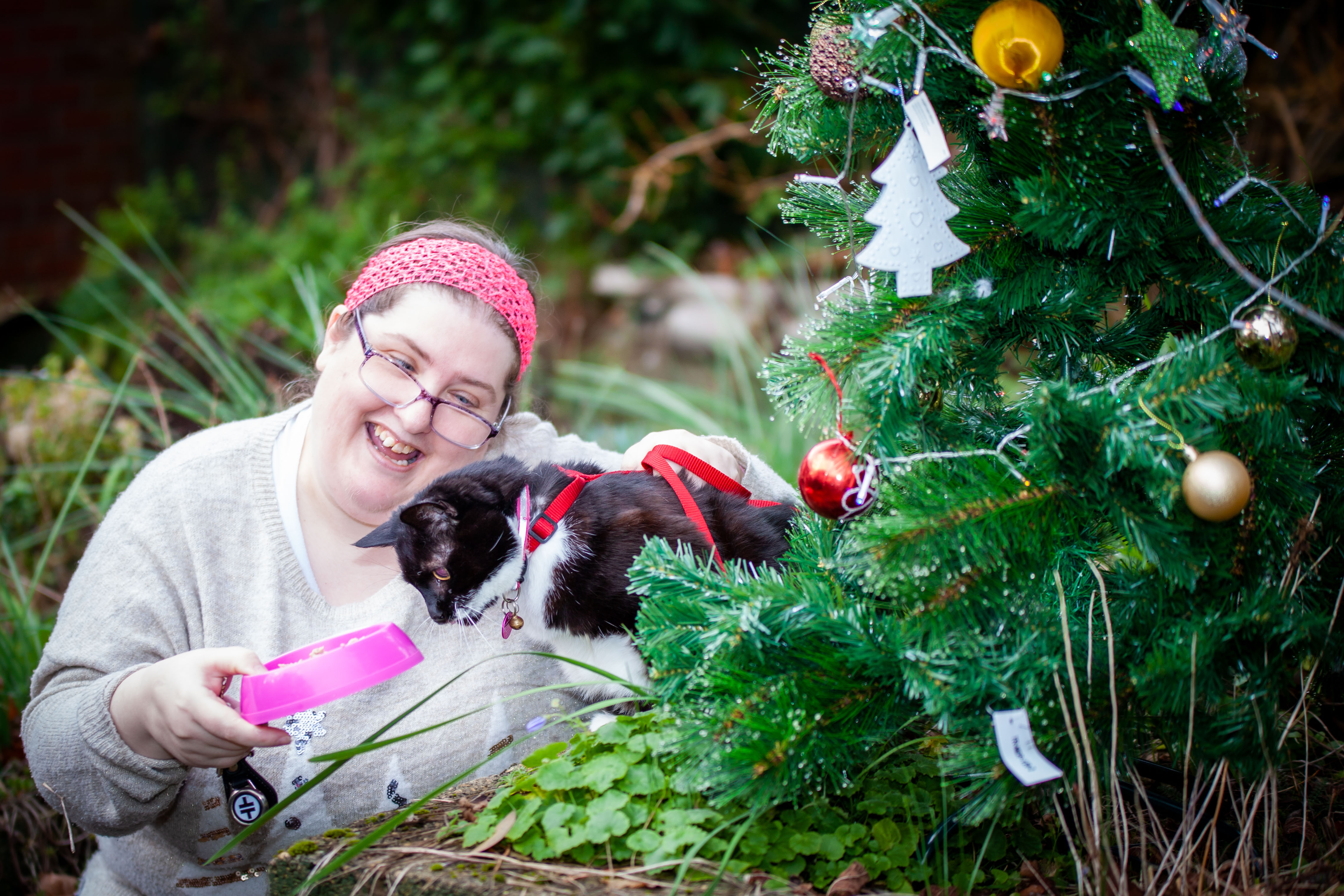 Brandy is BARKS Mascot this Christmas - appeal for foster carers and sponsors
