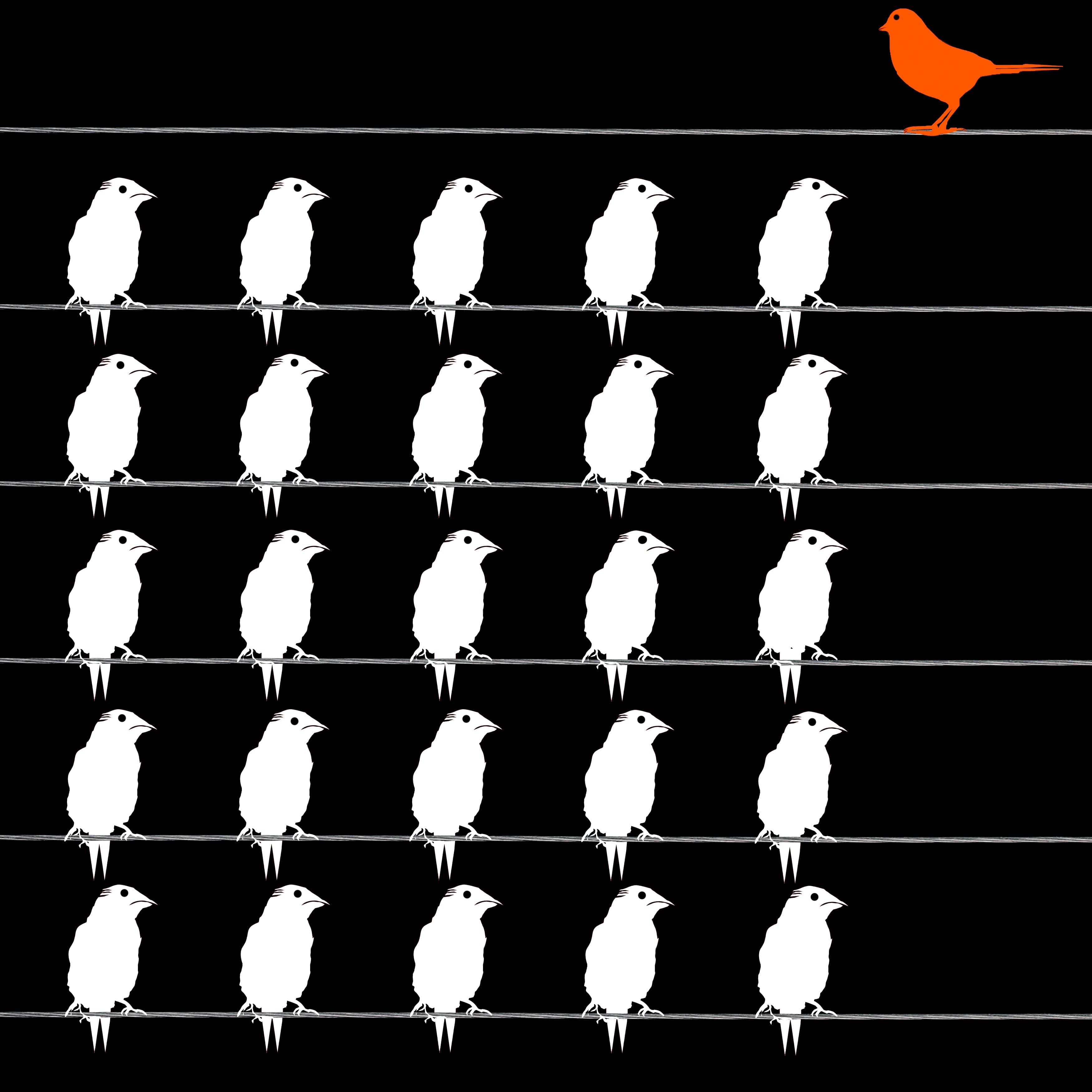 Oranger Vogel sticht herraus