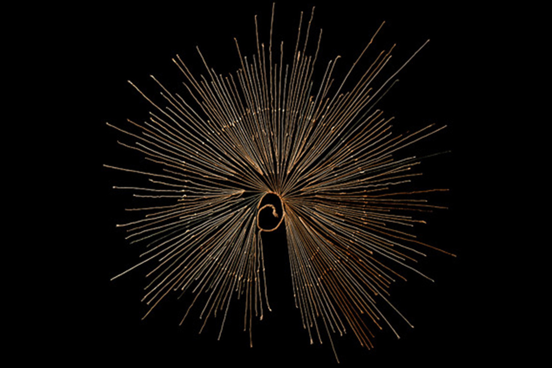 A Khipu knot from the Museum of Colchagua, Chile from 1400-1500 CE.