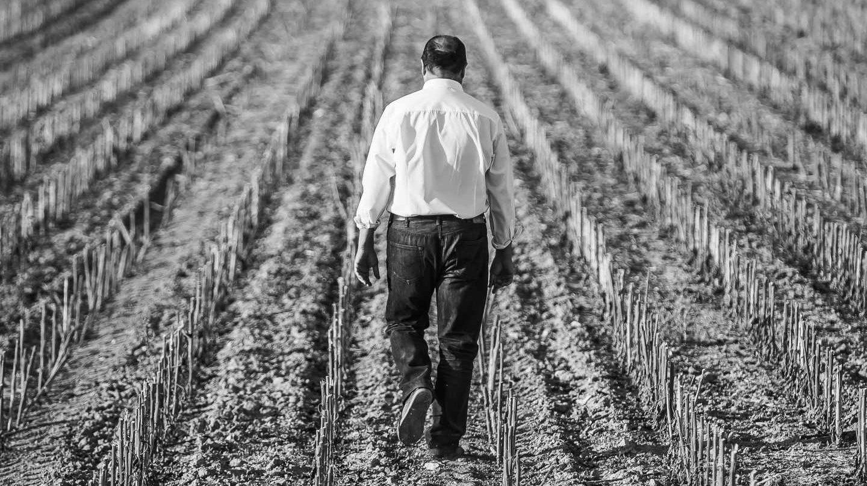 El empresario Carlos Moro en uno de los viñedos de Matarromera.