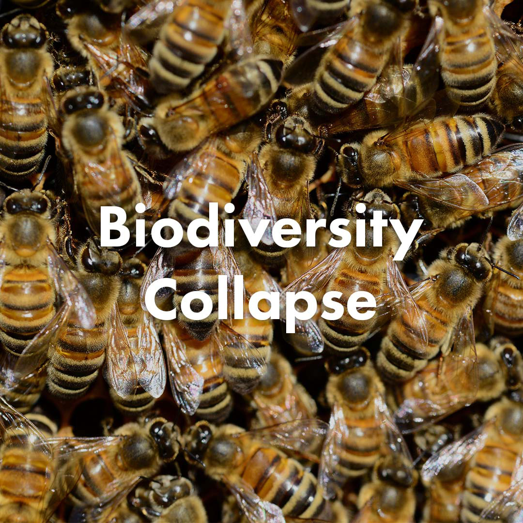 Biodiversity Collapse