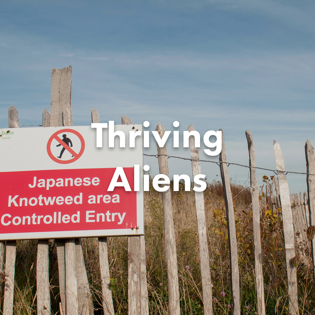 Thriving Aliens