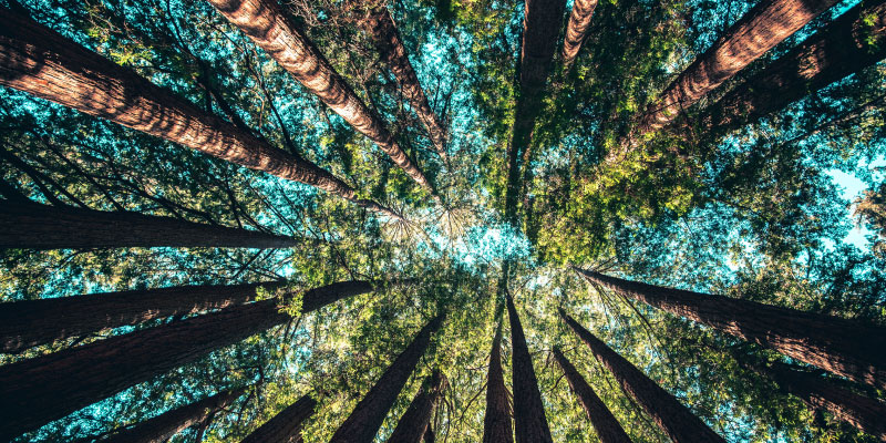 Forêt et cime des arbres