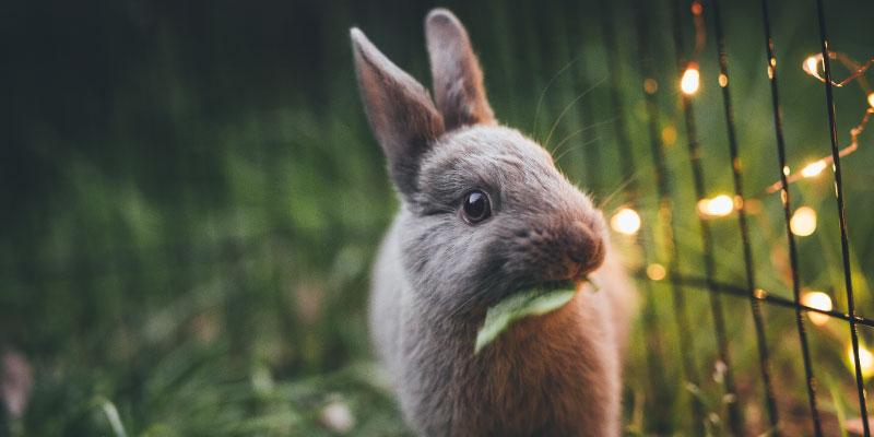 Petit lapin tout mignon mangeant une feuille