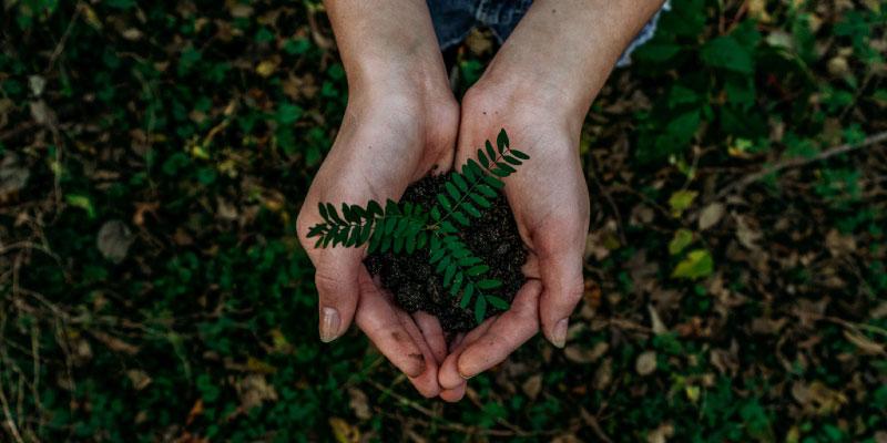 Une petite plante dans la paume des mains