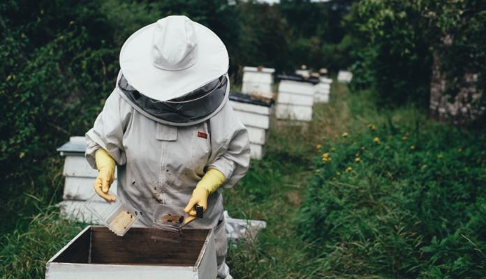 Apiculteur au dessus d'une ruche