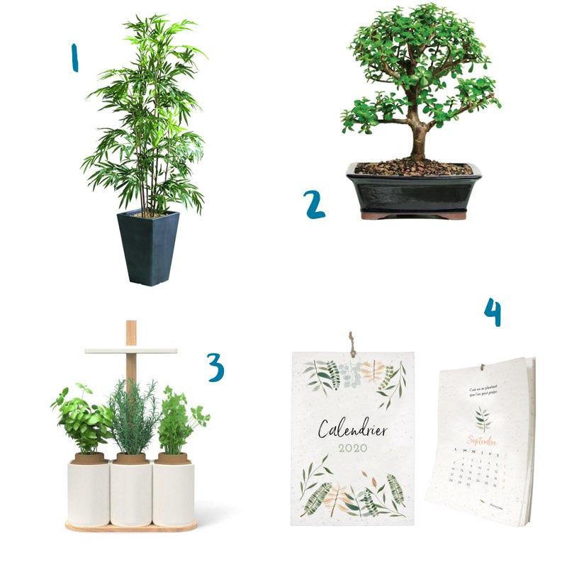 Idées cadeaux végétales