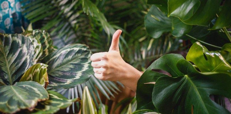 Pouce en l'air au milieu des plantes