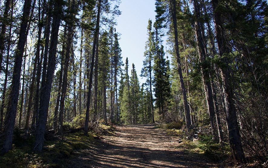 Birch Brook Trail