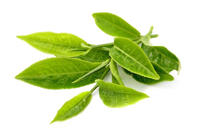 chữa trị viêm da đầu dẫn tới rụng tóc bằng lá trà
