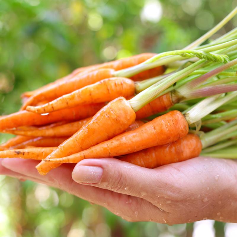 Bà bầu bị tiêu chảy nên ăn Cà rốt