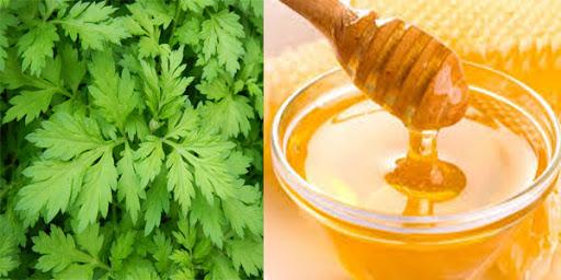 Bài thuốc ngải cứu và mật ong giảm đau lưng