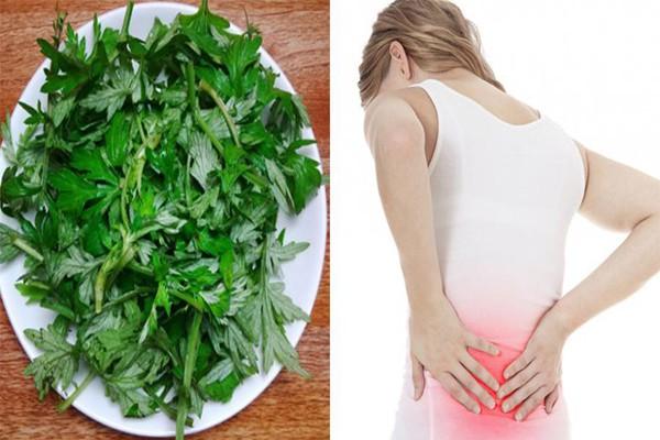 Dùng ngải cứu giảm đau lưng hiệu quả