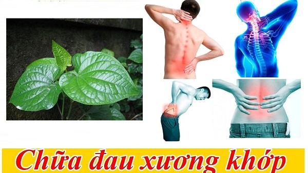 Cách trị đau nhức lưng hiệu quả từ lá lốt