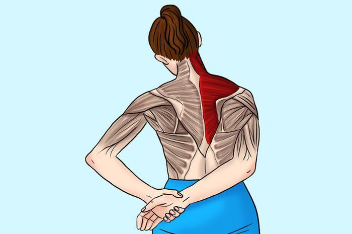Bài tập căng duỗi cơ hình thang trị đau vai gáy