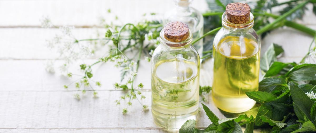 Tinh dầu hương nhu có tác dụng gì