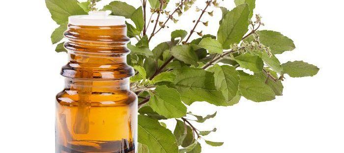 Tinh dầu hương nhu giúp mọc tóc