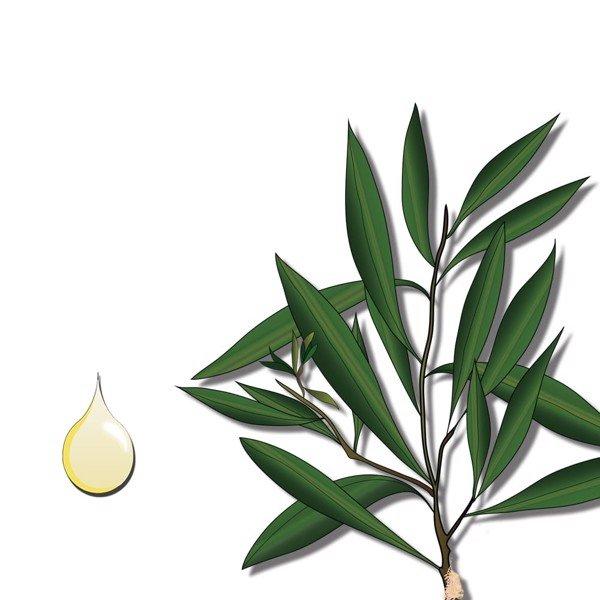 cách sử dụng tinh dầu khuynh diệp