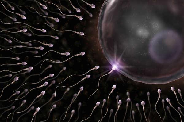 Tinh trùng sống được bao lâu trong tử cung