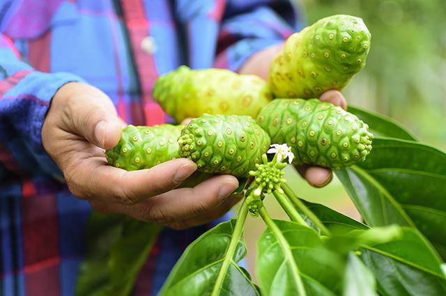 Cách khiến cho trái nhàu khô