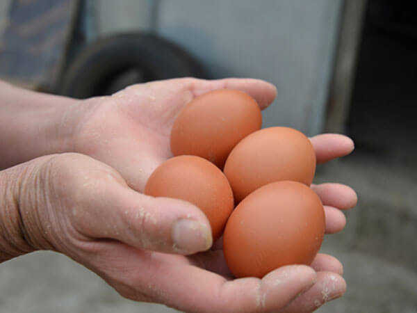 Nguyên liệu làm bánh khoai lang với trứng