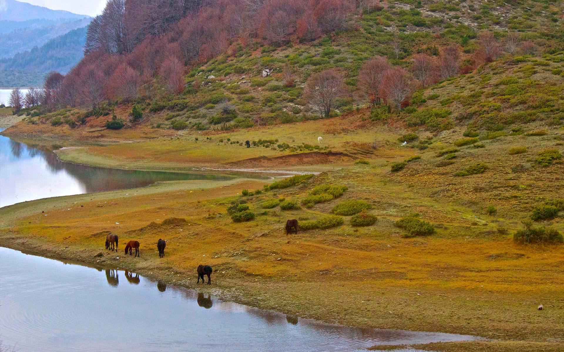horse-near-river