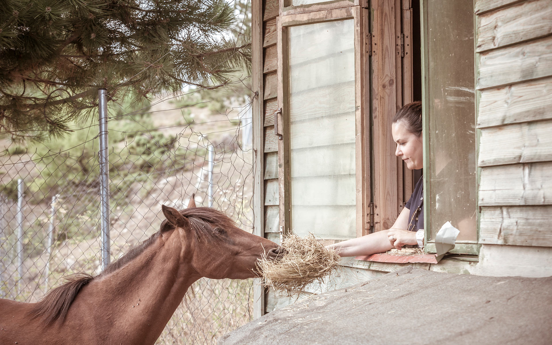 Grand Forest Metsovo horse stable