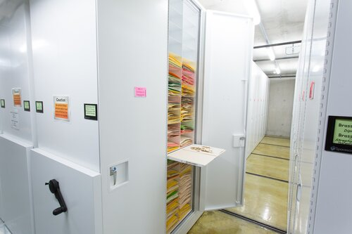 Cabinet storing botany samples with pull out reference shelf to review materials at California Academy of Sciences.jpg