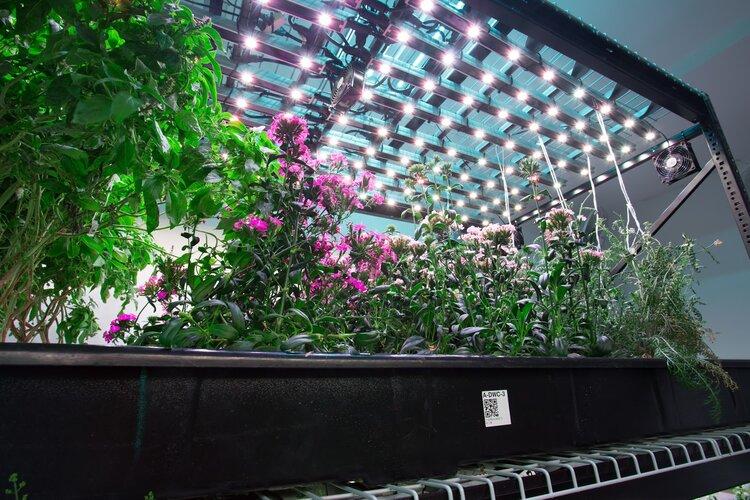 indoor-farm-hydroponics-moving-shelving-racking-spacesaver.jpg