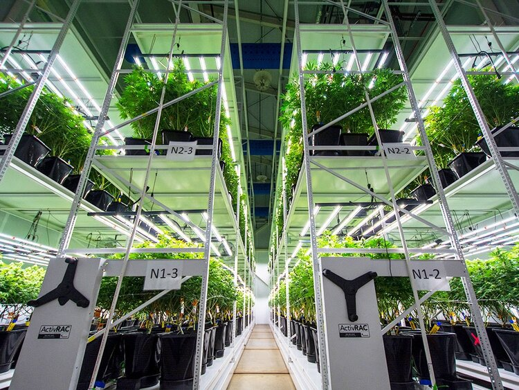 Cannabis Grow Room Spacesaver Vertical Racking.jpg