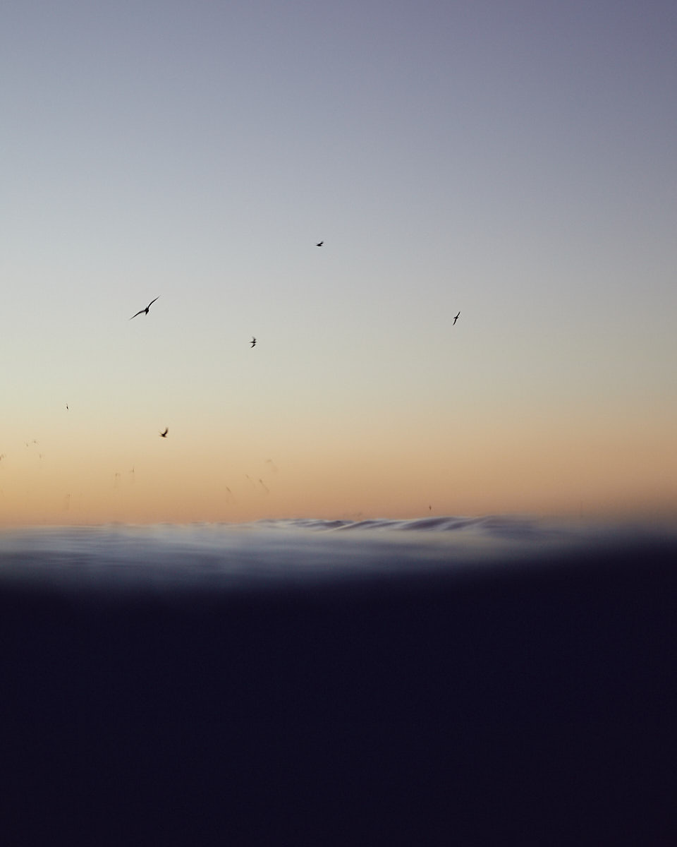 David Chatfield Photography - Wallaginji