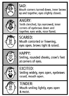 Có những loại cảm xúc nào