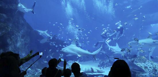 S.E.A. Aquarium