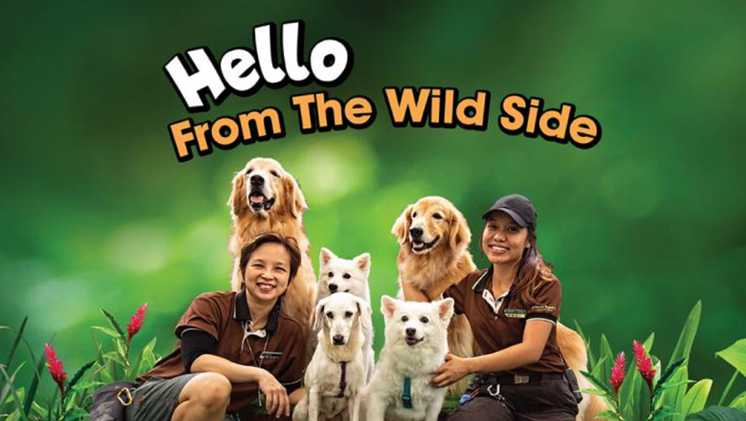 Hello from the Wild Side!