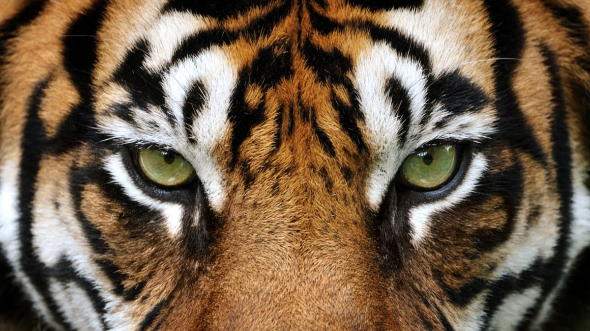 TIGERS KNOW THEIR BUSINESS: Entrepreneurial MBA alumni hit the ground running