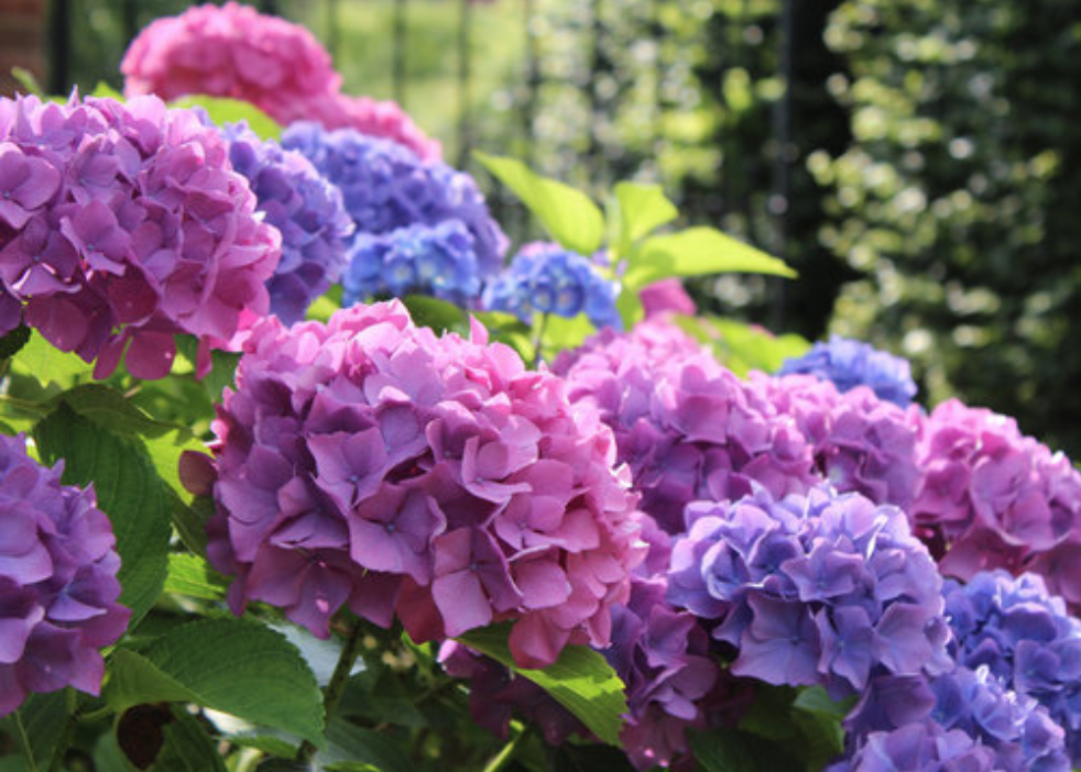 Add Color to Your Landscape