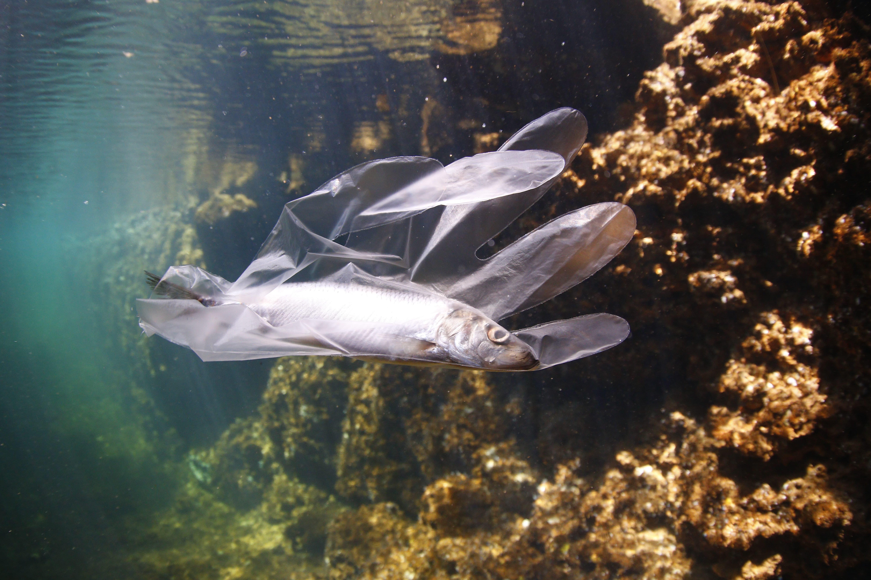 O ODS 14 busca preservar a vida marinha