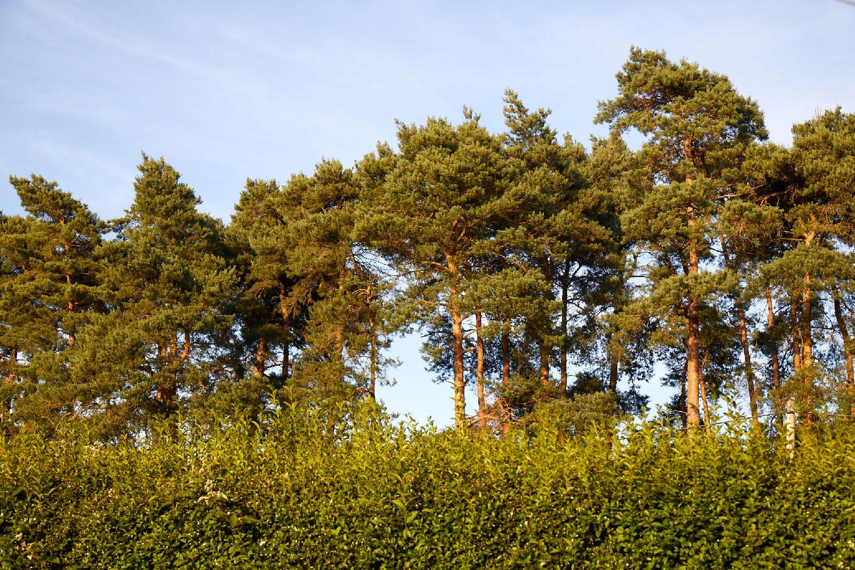 greenham-makers-trees