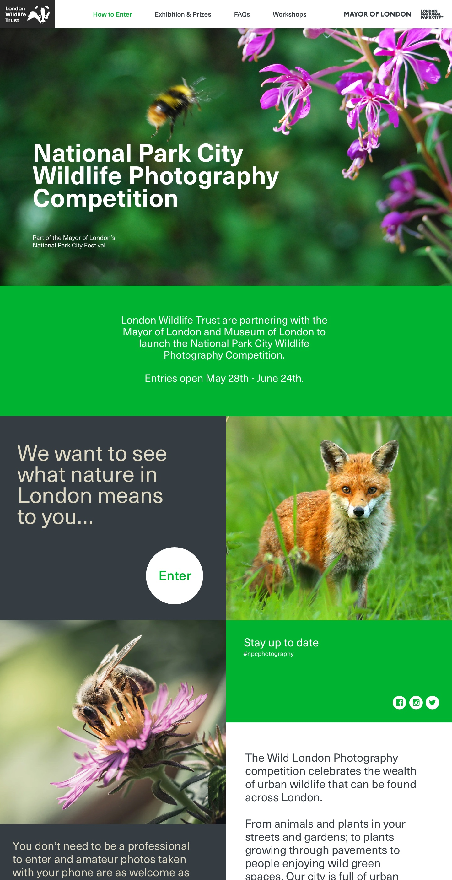 London Wildlife Trust homepage design - top