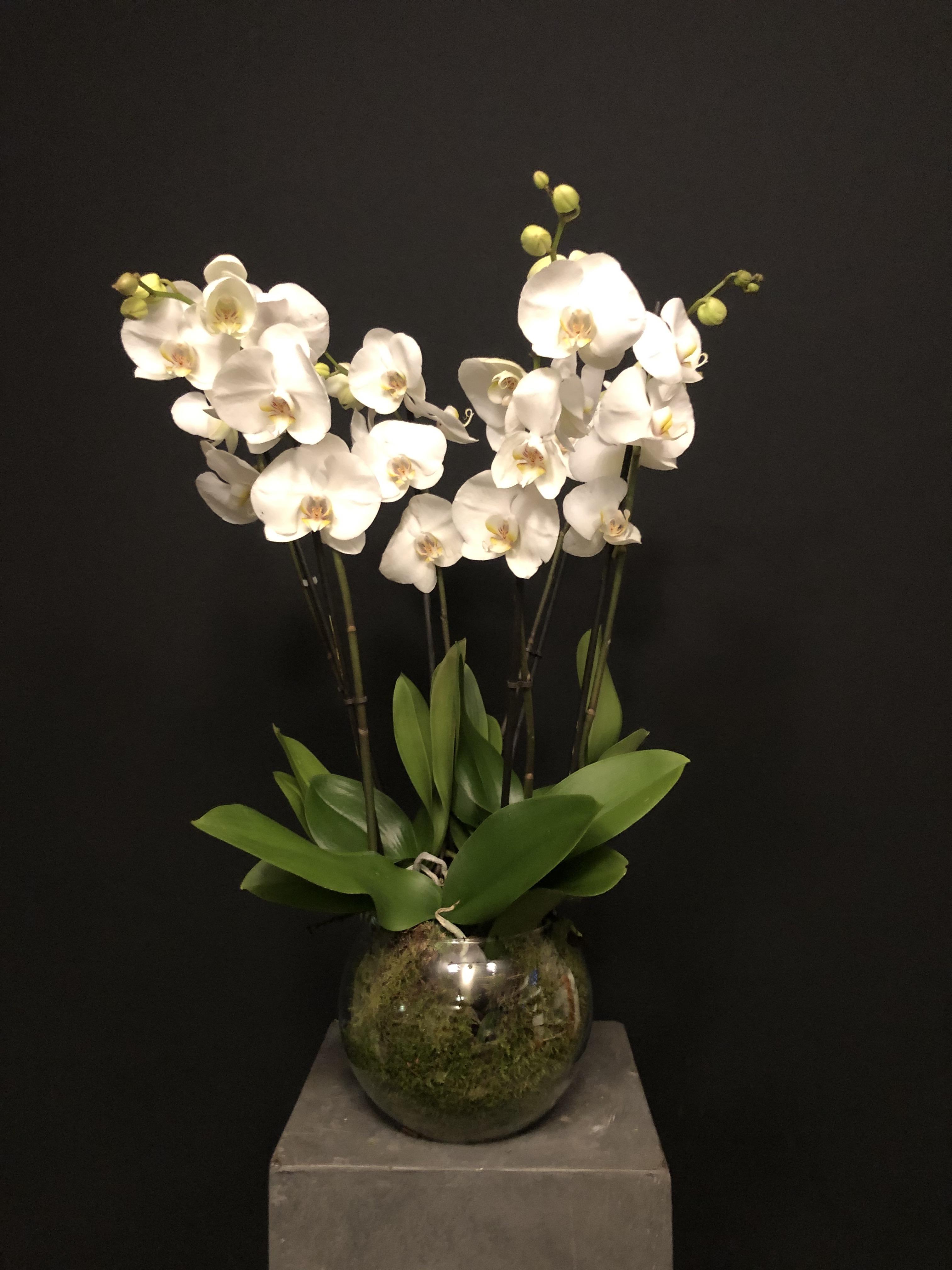 Orquídea 6 tallos en jarrón de cristal