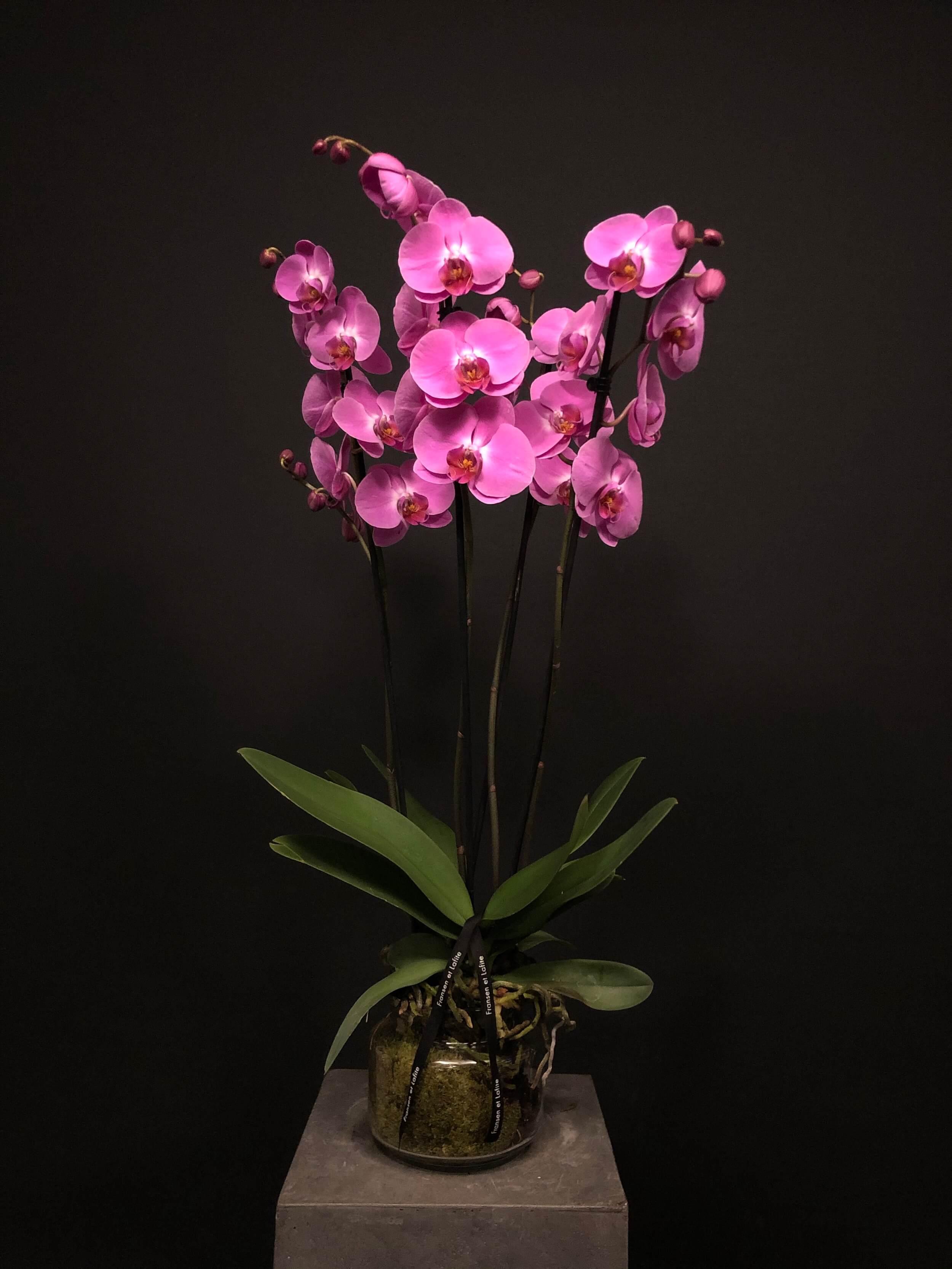 Orquídea 4 tallos en jarrón de cristal
