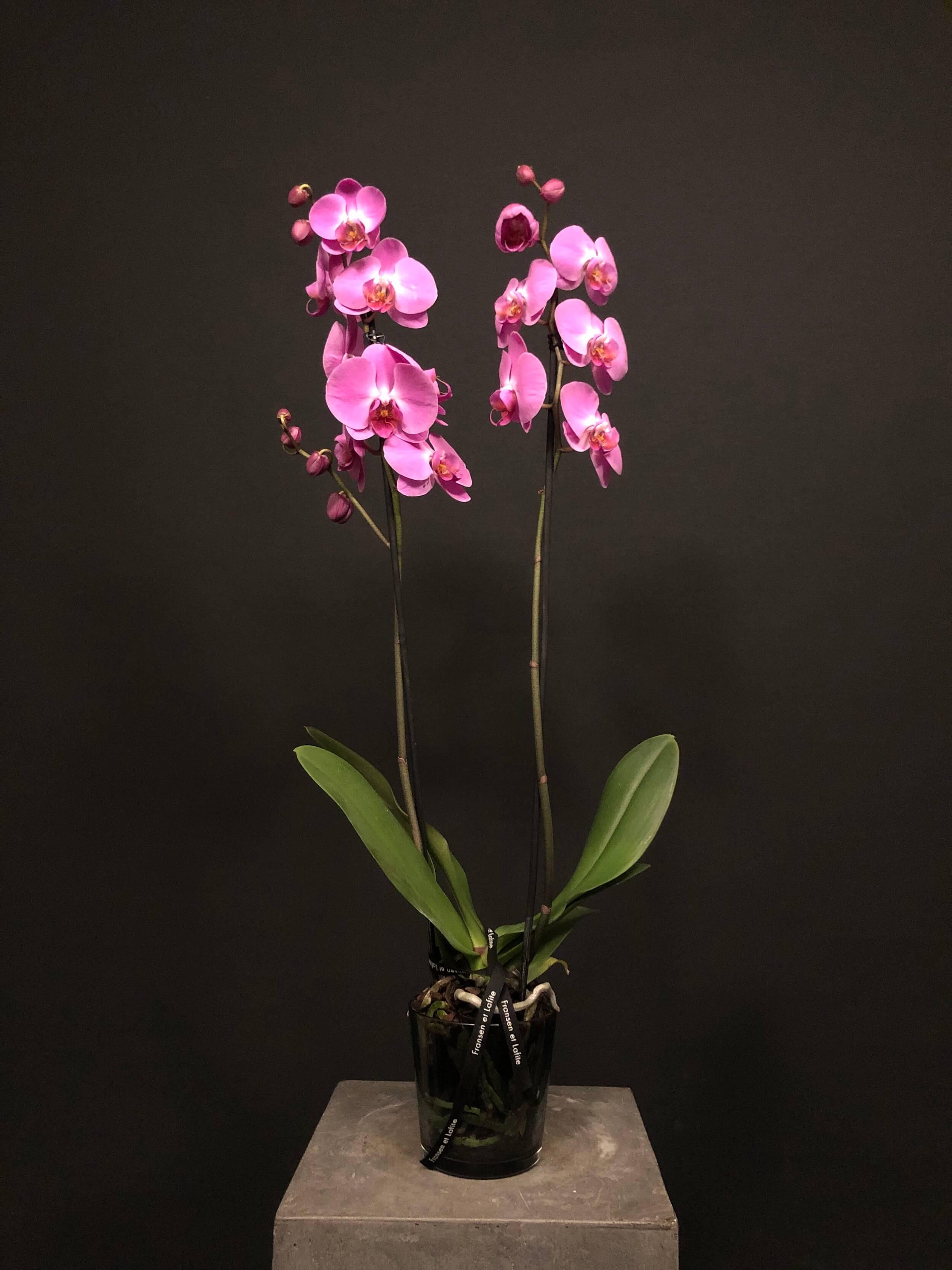 Orquídea 2 tallos en jarrón de cristal