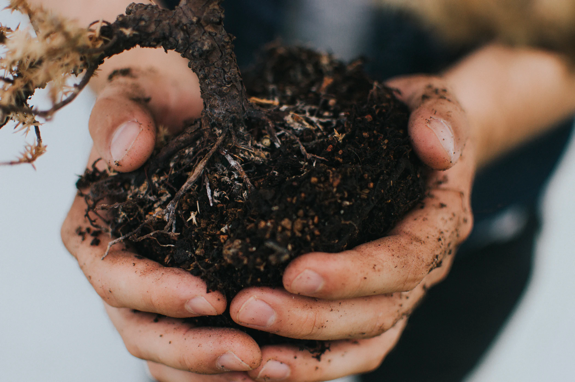 Hands holding healthy soil