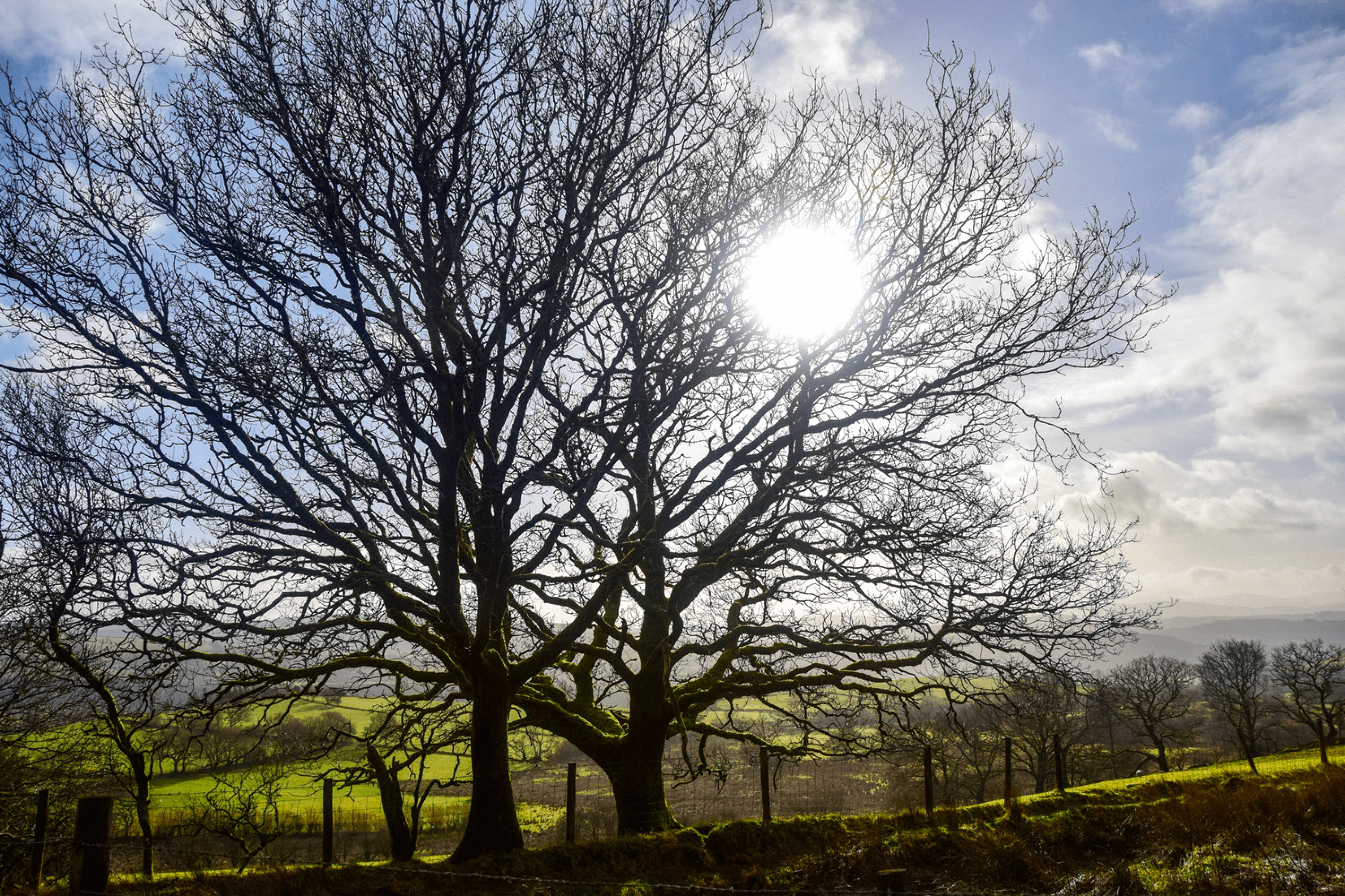 Tree in sunshine