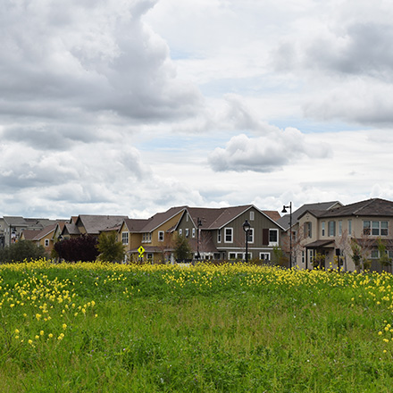 Image of a housing development