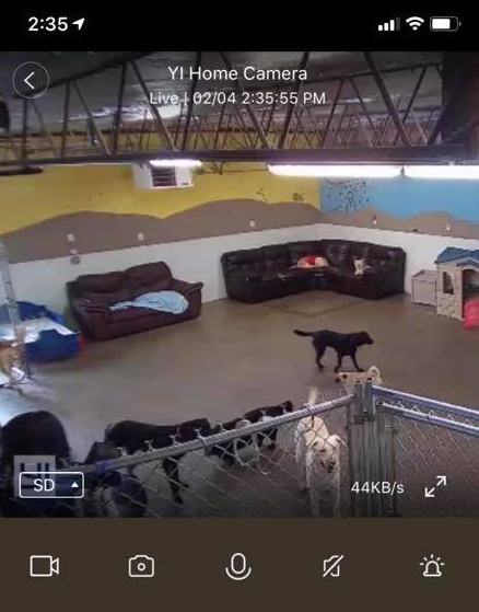 doggy cam CCTV view your dog